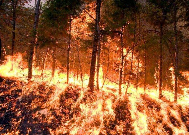 Fire covers the ground, while climbing the trees.